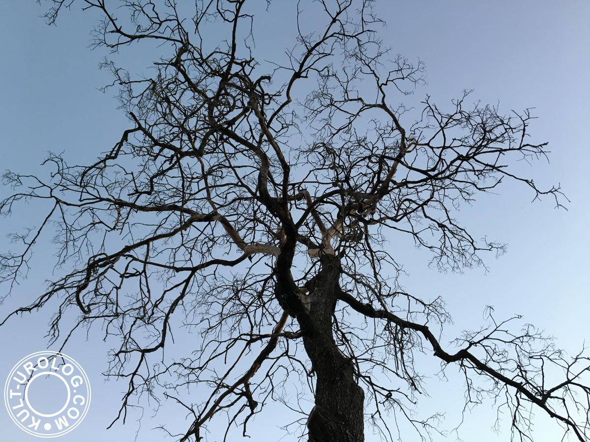 arbre_et_ciel